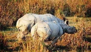जंगल सफारी का लेना है आनंद तो चलिए असम के डिब्रु सैखोवा पार्क के सफर पर